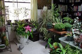 indoor container gardening gardening ideas