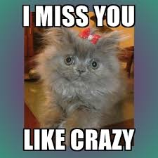 Miss You Meme - 20 funny i miss you memes for when you miss someone so bad