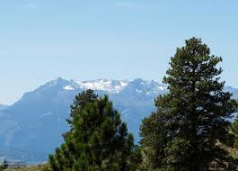 free picture conifer tree burch mountain