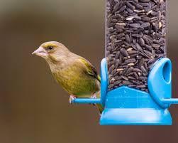 black sunflower seeds for wild birds peckamix