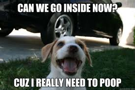 Dog Poop Meme - vet answers everything you need to know about your dog s crazy poop