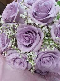 lavender roses best 25 lavender roses ideas on purple roses lilac