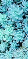 succulent wallpaper w a l l p a p e r s pinterest wallpaper