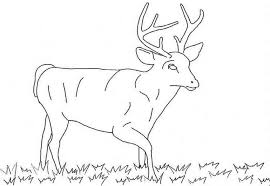 free printable deer coloring pages kids