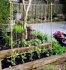 How To Build A Trellis Easy Guide To Growing Perfect Peas The Micro Gardener