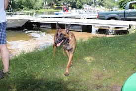belgian sheepdog massachusetts congamond lakes southwick ma new england nomad