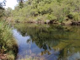 native plants western australia aquatic and riparian vegetation