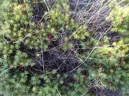native tasmanian plants south arm peninsula arm end walk u2013 tasmanian beaches
