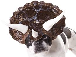 animal planet triceratops dog costume large amazon co uk pet