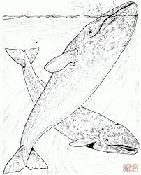 download coloring pages whale coloring page whale coloring page