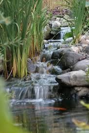 Types Of Fish For Garden Ponds - best 25 pond cleaning ideas on pinterest fish pond gardens