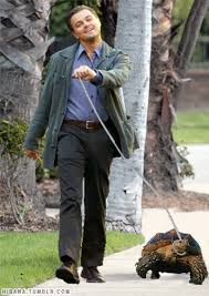 Leonardo Dicaprio Walking Meme - leonardo dicaprio walking his tortoise