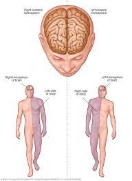 Right Side Human Anatomy Stroke Diagnosis And Treatment Mayo Clinic
