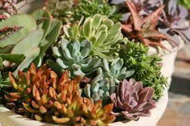 some interesting secrets about the succulents hum ideas