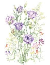 Lisianthus Flower Purple 25in 16 Best Botanical Art Favourites Images On Pinterest Botanical