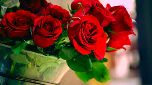 4 great places to buy valentine roses in lagos nigeria jumia