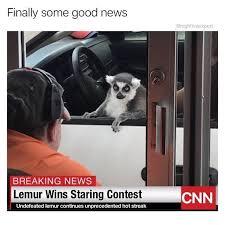 Lemur Meme - nice job lemur memebase funny memes