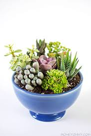 Succulent Gardens Ideas Small Succulent Garden Diy Succulent Garden Ideas Diy Mini