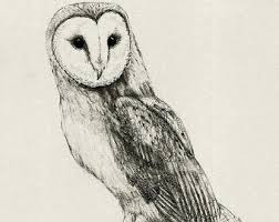 barn owl drawing etsy