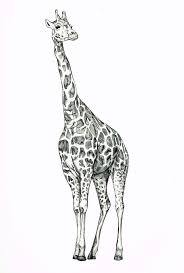 best 25 baby giraffe tattoo ideas only on pinterest giraffe