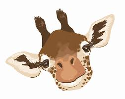 juma the giraffe u0027s giraffe facts juma the giraffe
