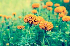 free stock photo of beautiful flowers flower flower garden