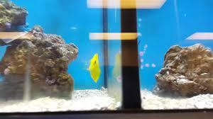Petsmart Christmas Aquarium Decorations by Tropical Fish Puffer Fish At Petco Really Cool Enjoying