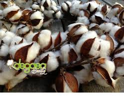 degasa beauty cotton pads cotton balls gauze