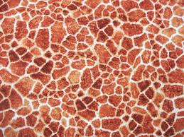 australian shepherd fabric australian shepherd wallpaper 1024x768 45670