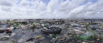 petition ban plastic bags in florida change org