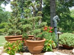 front porch topiaries johntheplantman u0027s stories musings and