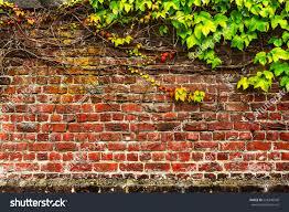 red brick garden wall creeping plant stock photo 228340540