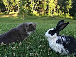 why we got rabbits u2013 farm fresh for life u2013 real food for health