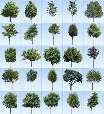 Home Design 3d Textures by Pro Viz 3d Tree Textures Xtreme 2