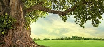 strike a pose learn about six celebri trees premier tree