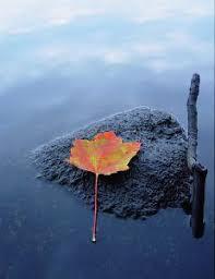 Imagenes Zen Gratis | zen descargar fotos gratis