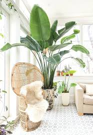 low light indoor trees house tall indoor plants large trees low light green fantastic