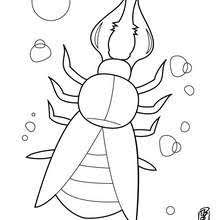 centipede coloring pages hellokids