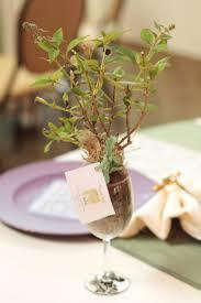 26 best olive tree ideas images on pinterest olive tree olive