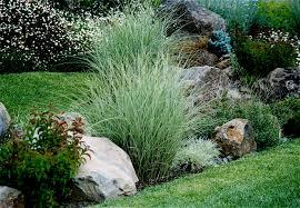 ornamental grasses in the garden details landscape art
