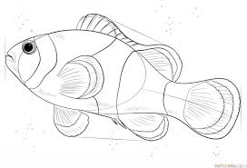 how to draw a clown fish step by step drawing tutorials