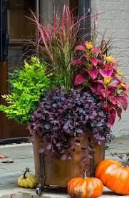 Christmas Ideas For Outside Planters by 266 Best Containers Images On Pinterest Gardening Christmas
