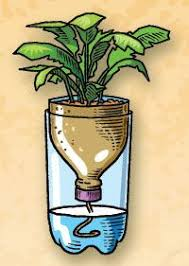 10 Vegetables U0026 Herbs You by How To 10 Vegetables U0026 Herbs You Can Eat Once U0026 Regrow Forever