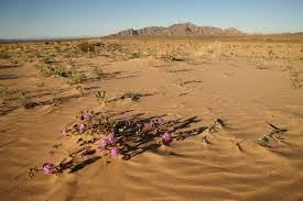 native sonoran desert plants in the desert why some plant species are survivors