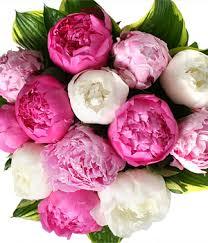 Peony Flower Mix Color Peonies Z101 78 135 99 Toronto Florist U0026 Flower