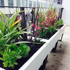 lloyd the farmer u0027s tips on courtyard and balcony planters