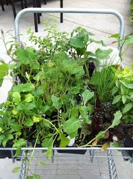 backyard vegetable gardening and top 10 vegetables and herbs to