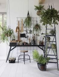 mooi wat planten doen lisanne van de klift room pinterest