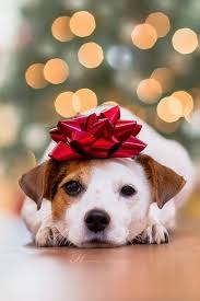 best christmas gifts for dogs and dog lovers peoria az