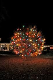 48th annual lbj tree lighting parks wildlife department